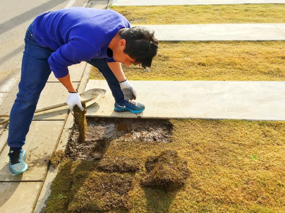 芝の補修前