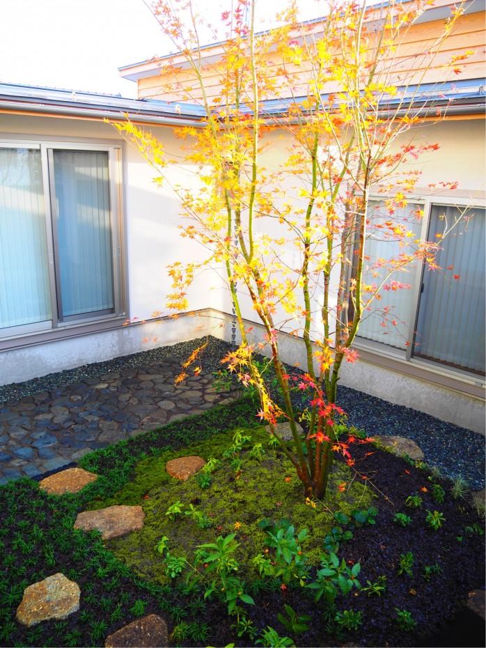 モミジの植栽完了!